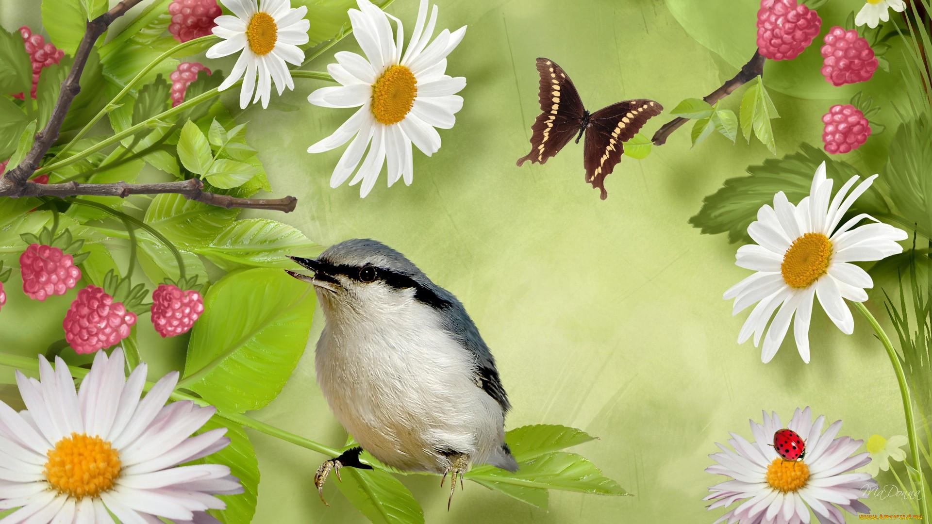 Красивые картинки с цветами бабочками птичками росой дождем